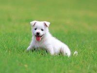 Приснился белый щенок во сне